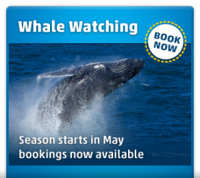 whale watching cruise sydney harbour